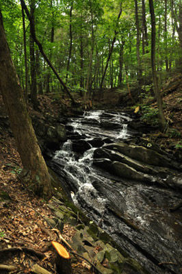 Falling Waters Preserve